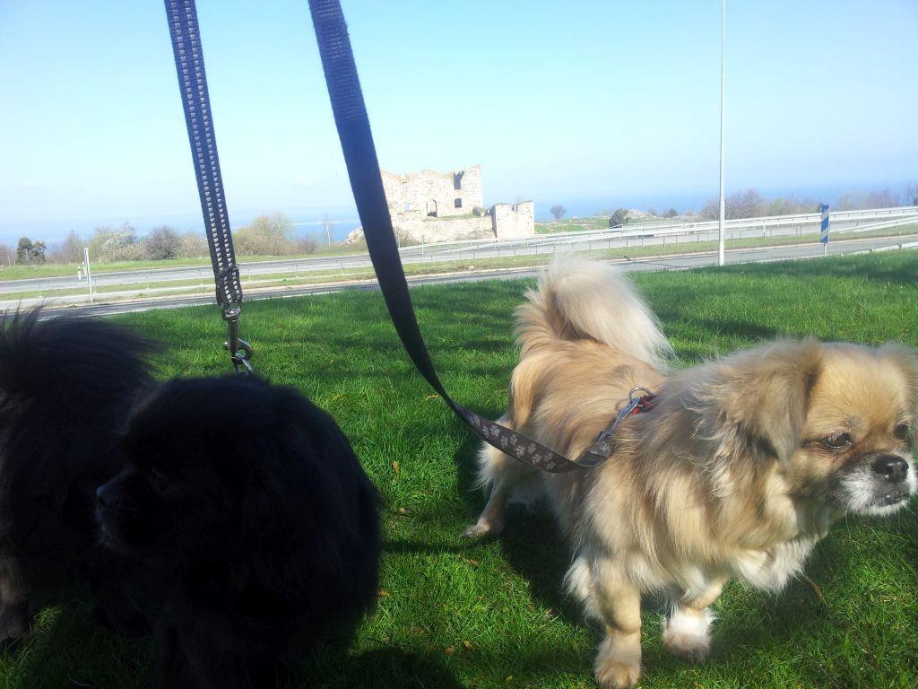 koirien matkustus2