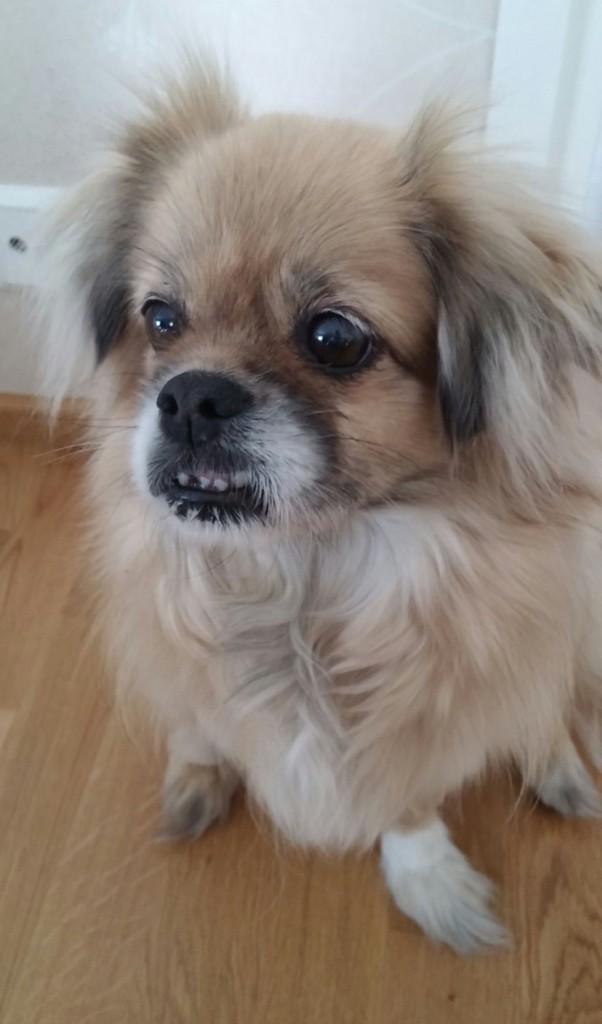 Koirien madotus Tanskassa02
