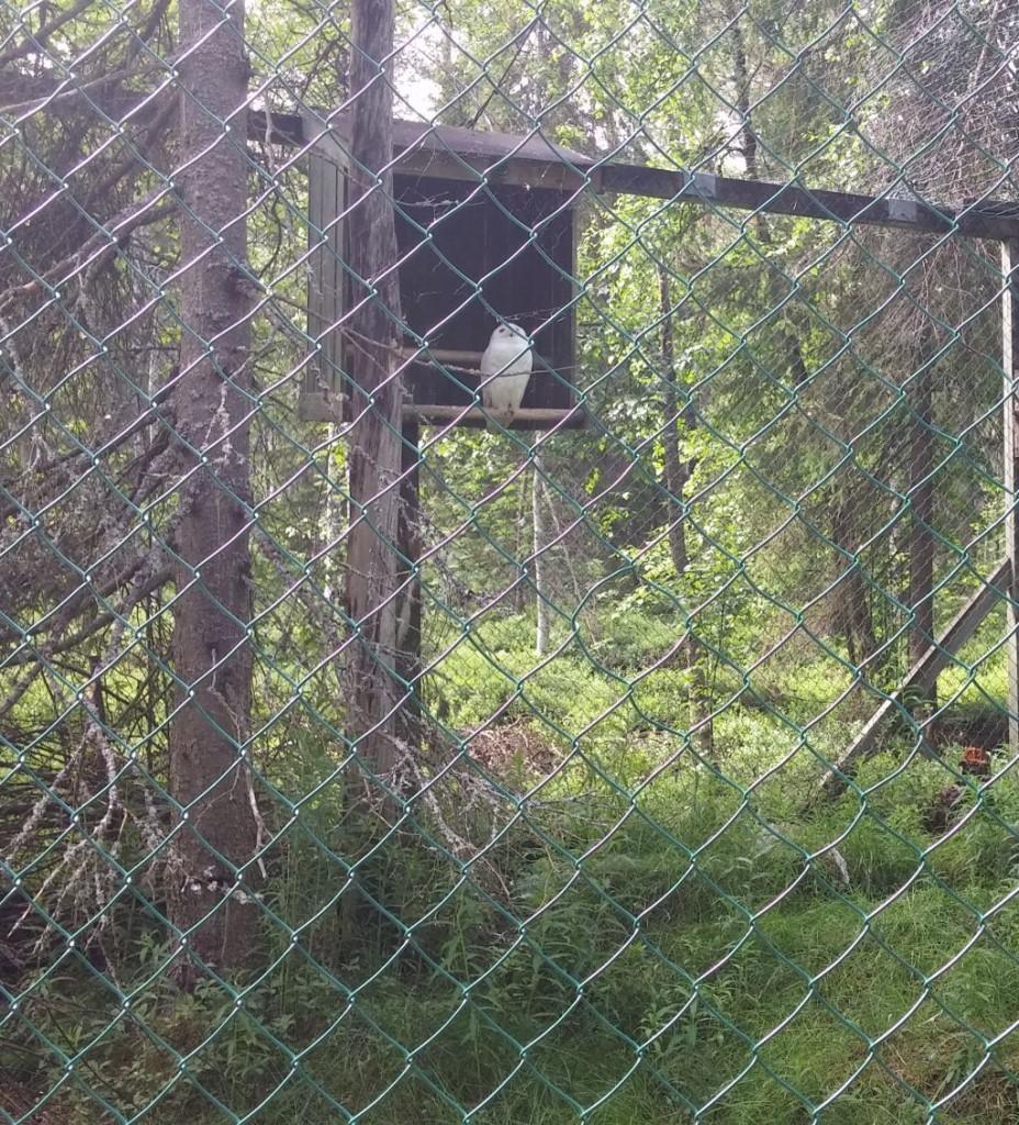 Ranuan eläinpuisto08
