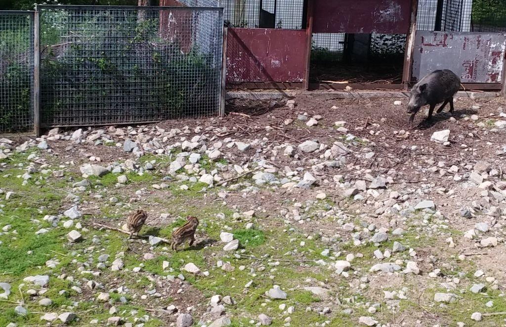 Ranuan eläinpuisto13