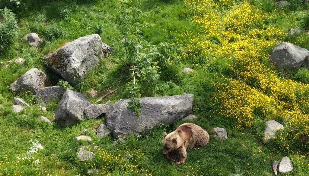 Ranuan eläinpuisto14