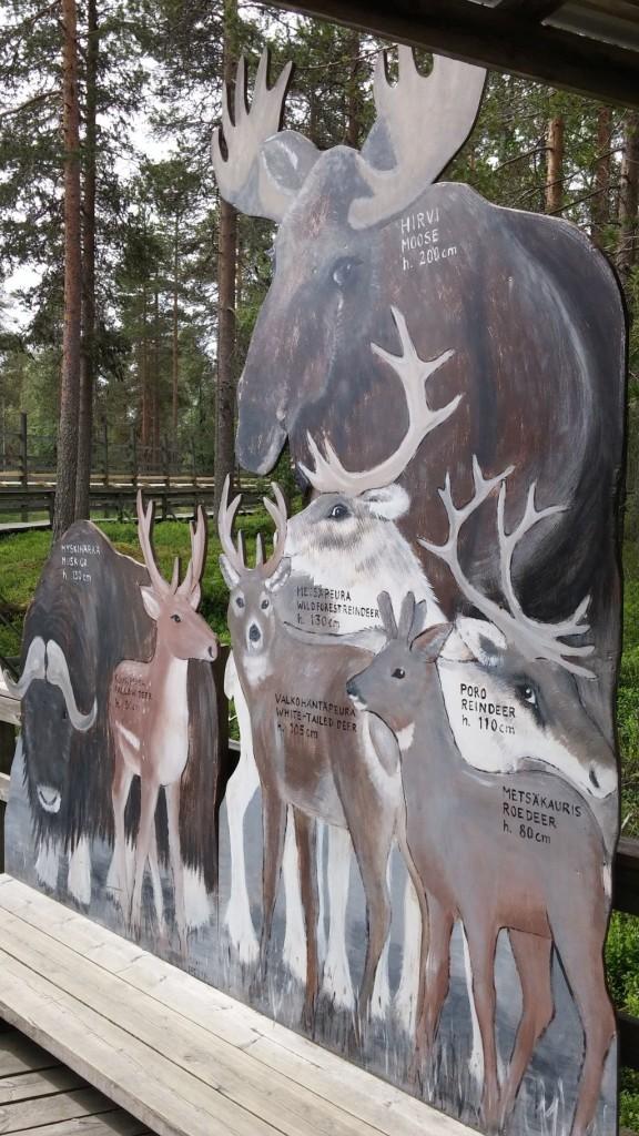 Ranuan eläinpuisto20