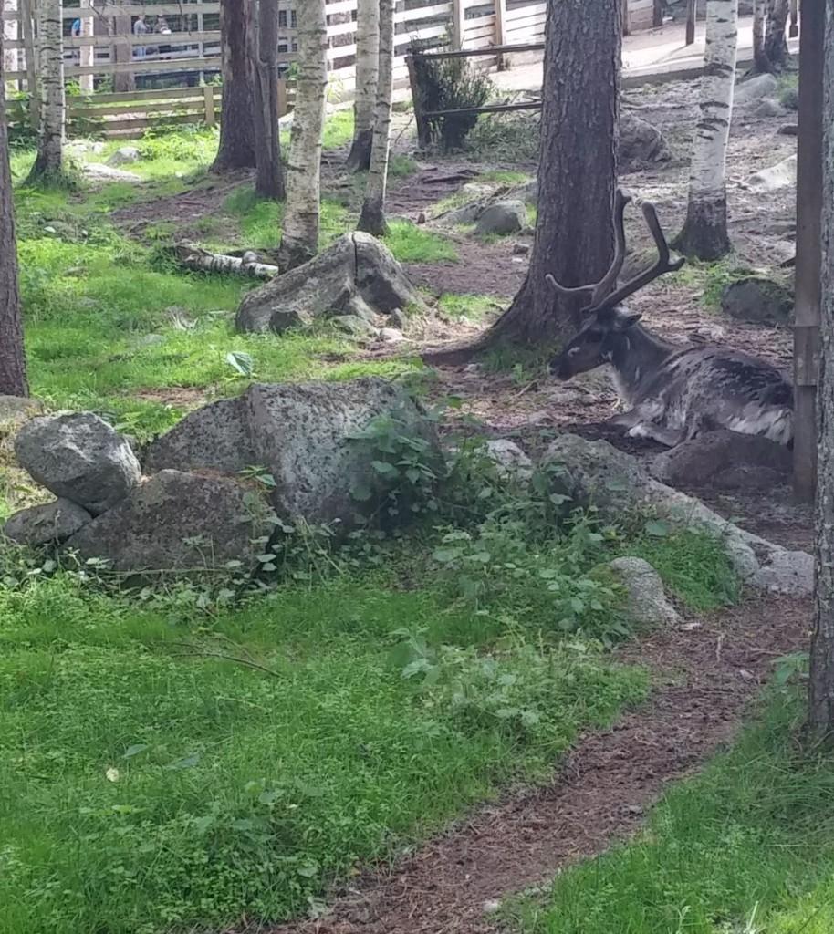 Ranuan eläinpuisto21