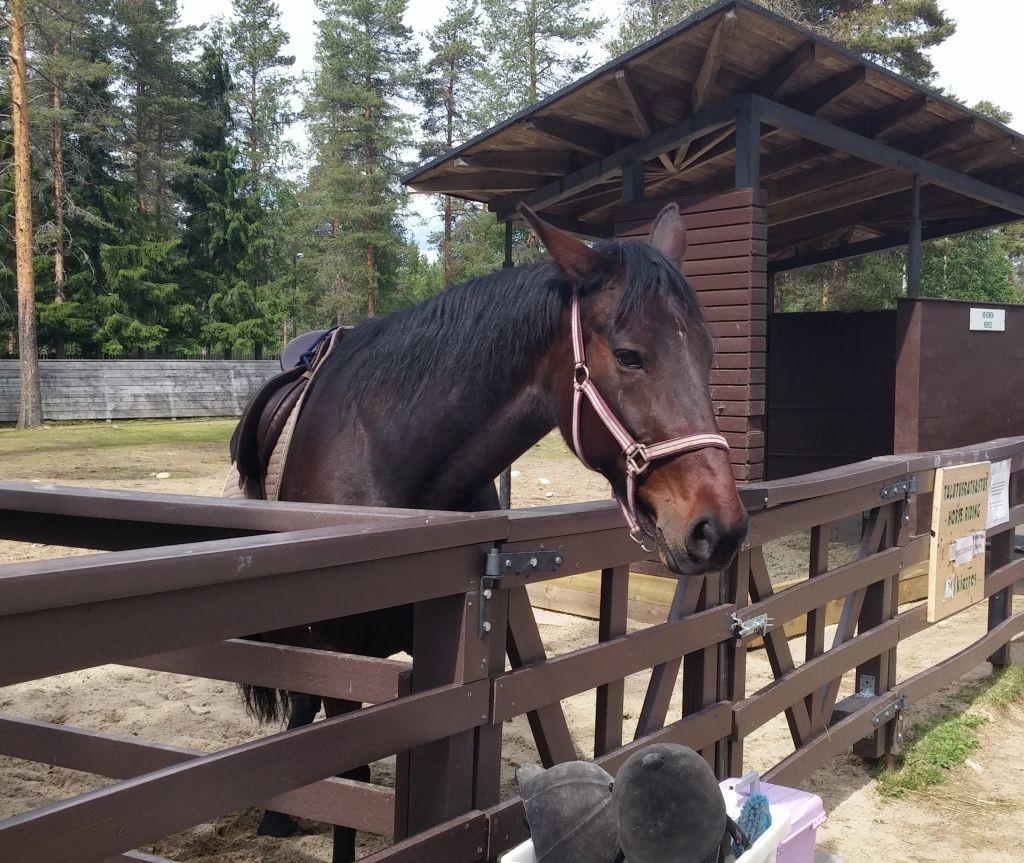 Ranuan eläinpuisto26